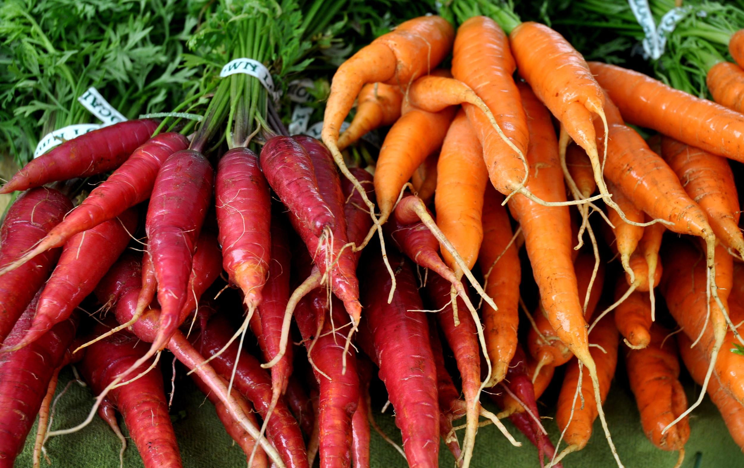 Carrots from City Grown Farm. Photo copyright 2013 by Zachary D. Lyons.
