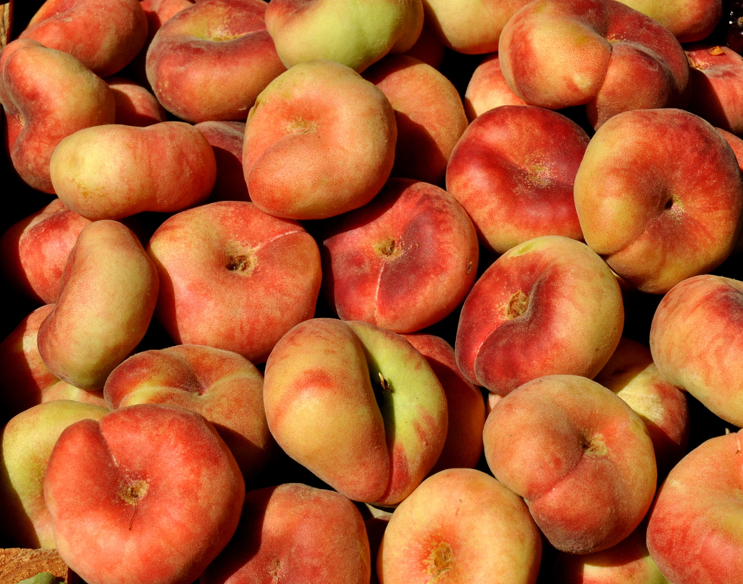 Donut peaches from Collins Family Orchards. Photo copyright 2013 by Zachary D. Lyons.
