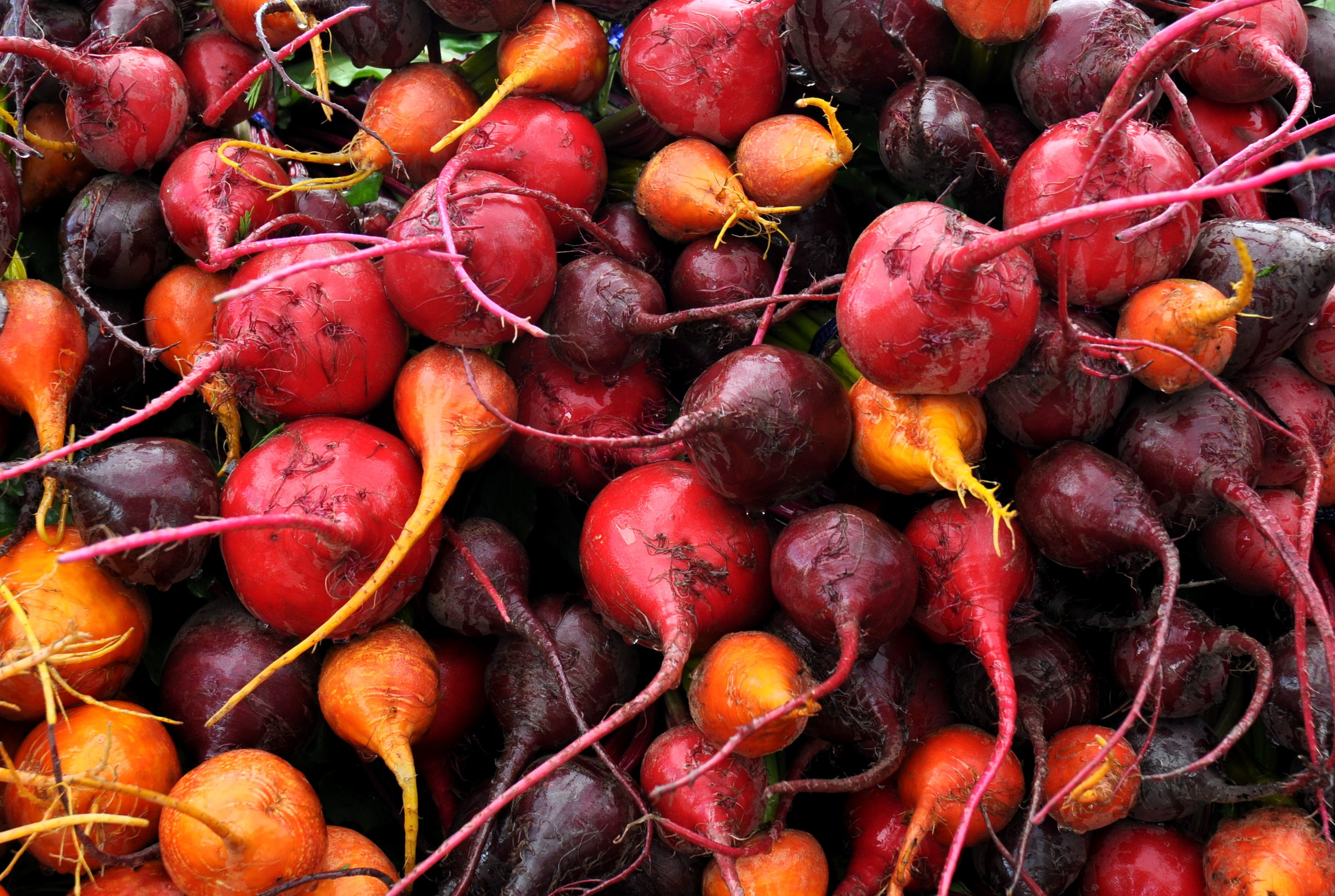 Mixed beets from Kirsop Farm. Photo copyright 2013 by Zachary D. Lyons.