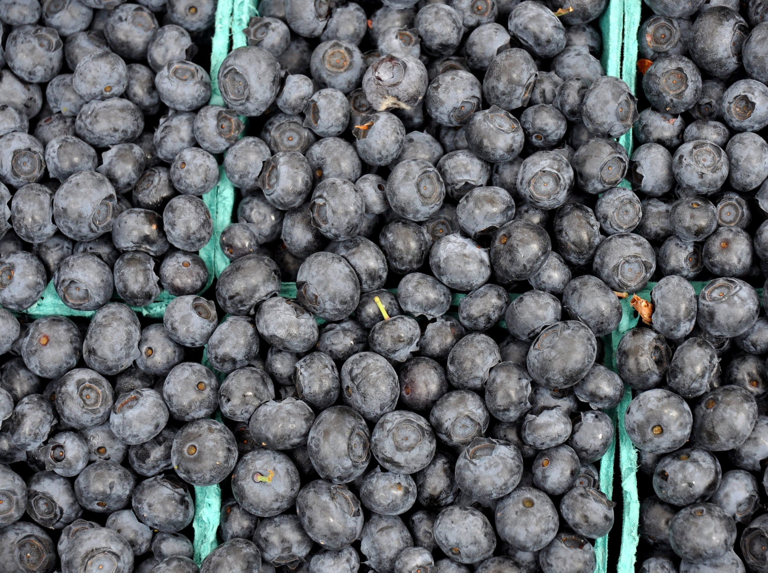 Blueberries from Sidhu Farms.. Photo copyright 2013 by Zachary D. Lyons.