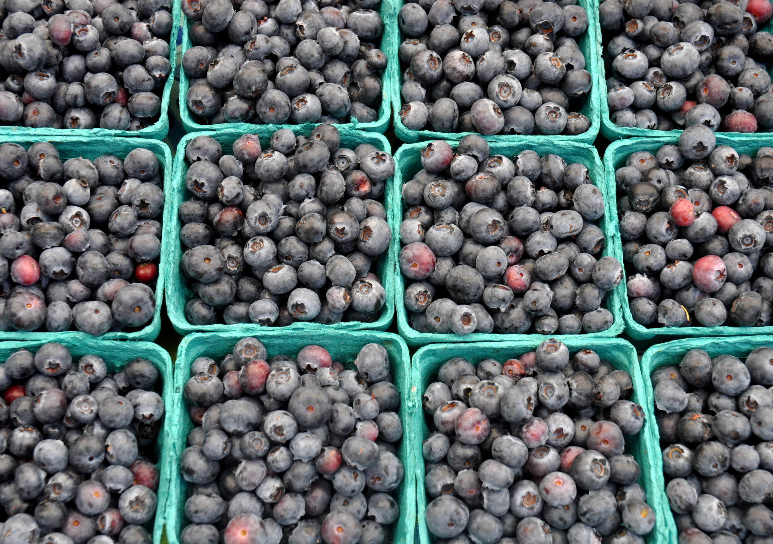 Spartans blueberries from Whitehorse Meadows Farm. Photo copyright 2013 by Zachary D. Lyons.