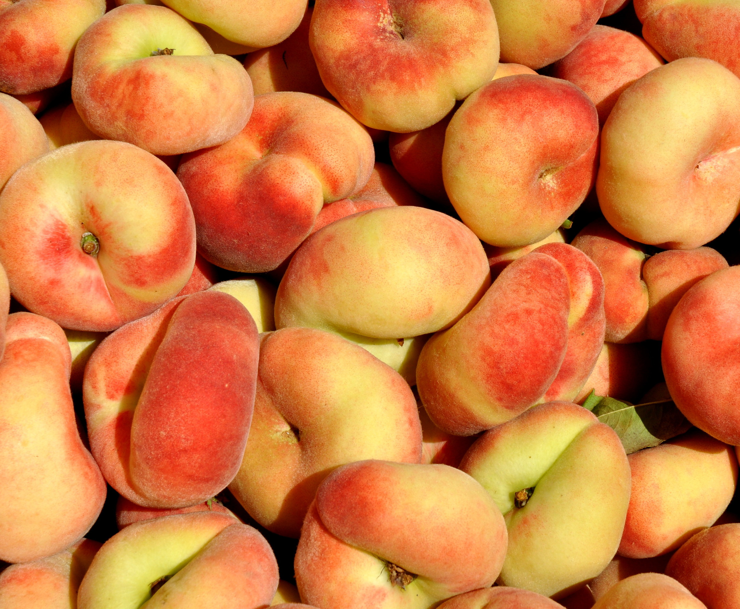 Donut peaches from ACMA Mission Orchards. Photo copyright 2013 by Zachary D. Lyons.