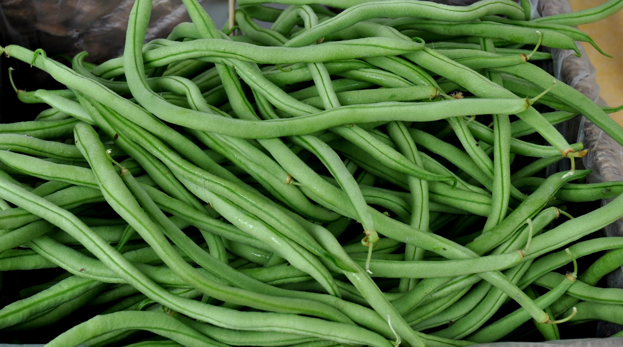 Fortex green beans from City Grown Farm. Photo copyright 2013 by Zachary D. Lyons.
