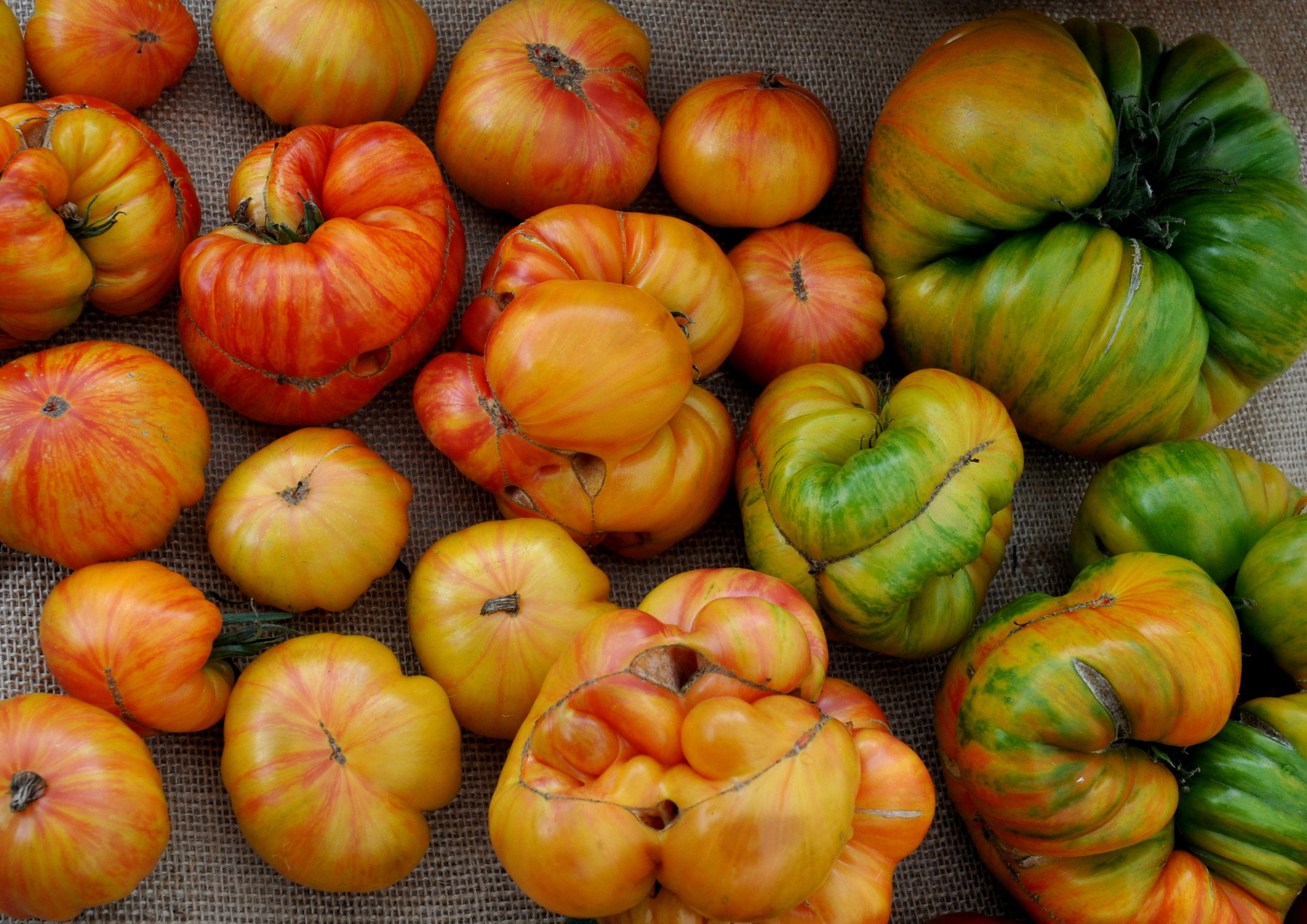 Copia tomatoes from One Leaf Farm. Photo copyright 2013 by Zachary D. Lyons.