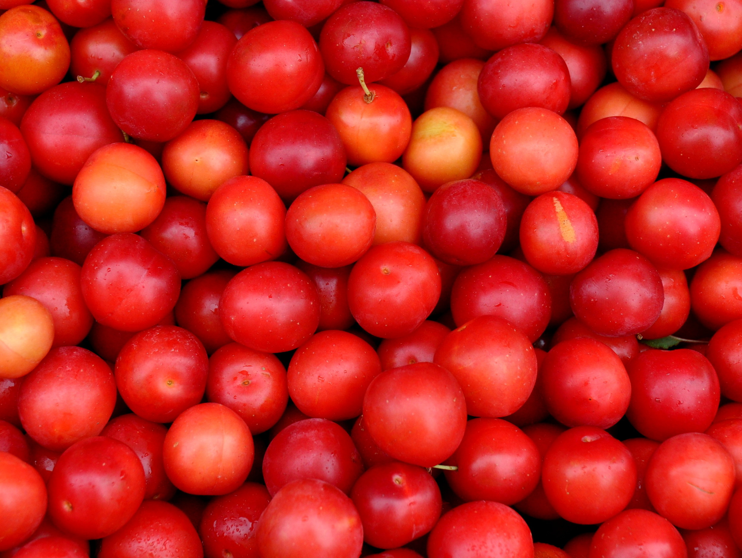 Cherry plums from Tiny's Organic Produce. Photo copyright 2013 by Zachary D. Lyons.
