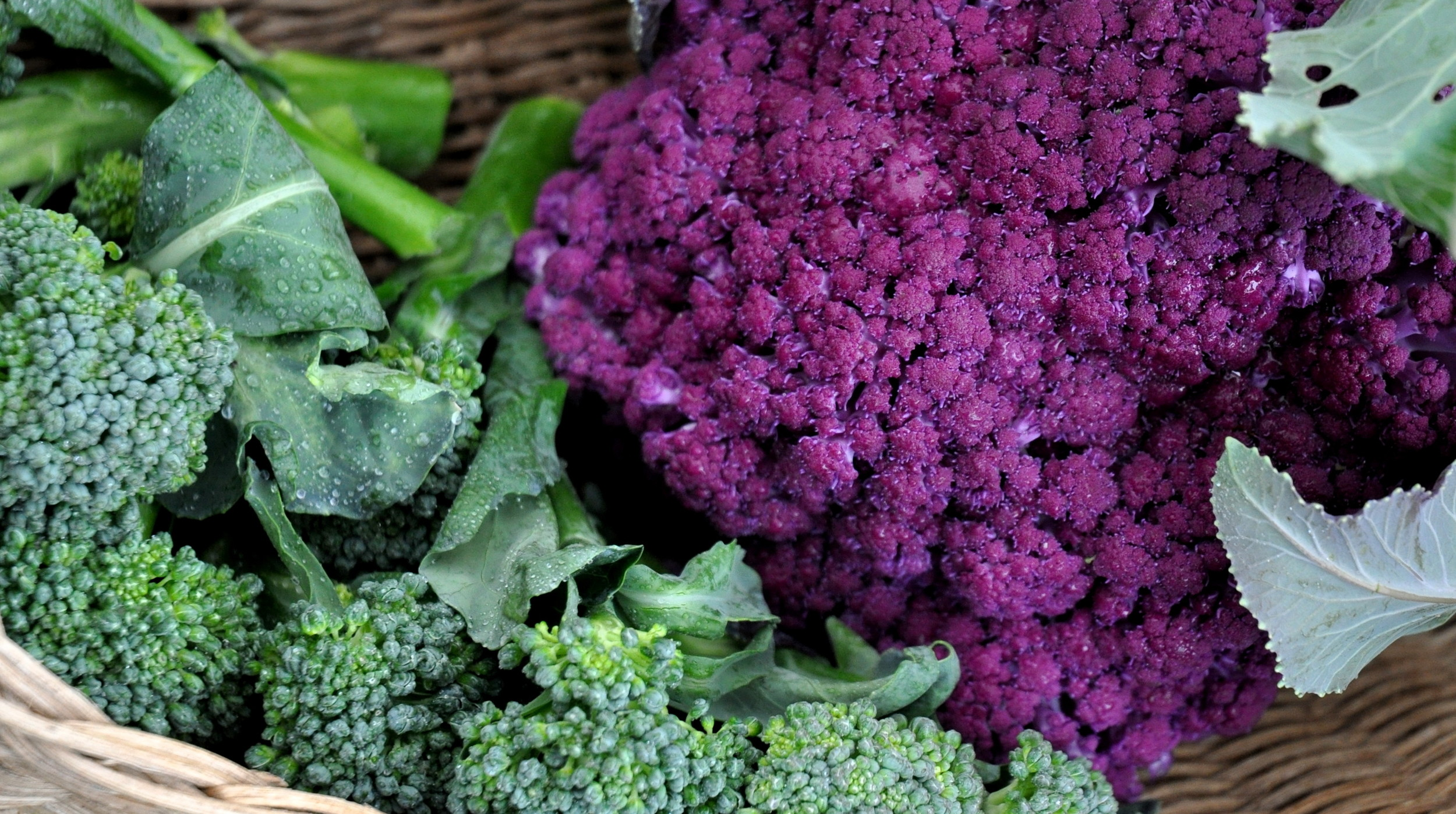 Broccoli and purple cauliflower from Seattle Youth Garden Works. Photo copyright 2013 by Zachary D. Lyons.
