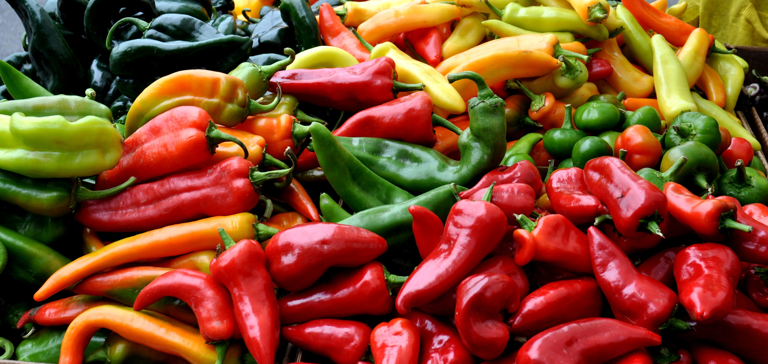 Hot chile peppers from Alvarez Organic Farms at Wallingford Farmers Market. Copyright  Zachary D. Lyons.