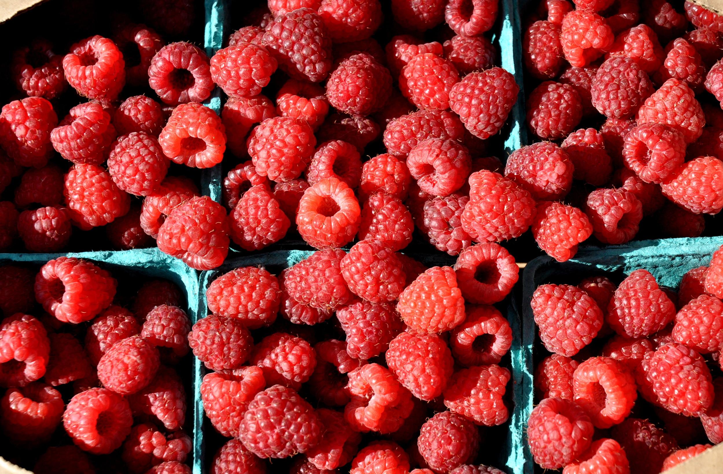 Raspberries from Gaia's Harmony Farm. Photo copyright 2013 by Zachary D. Lyons.