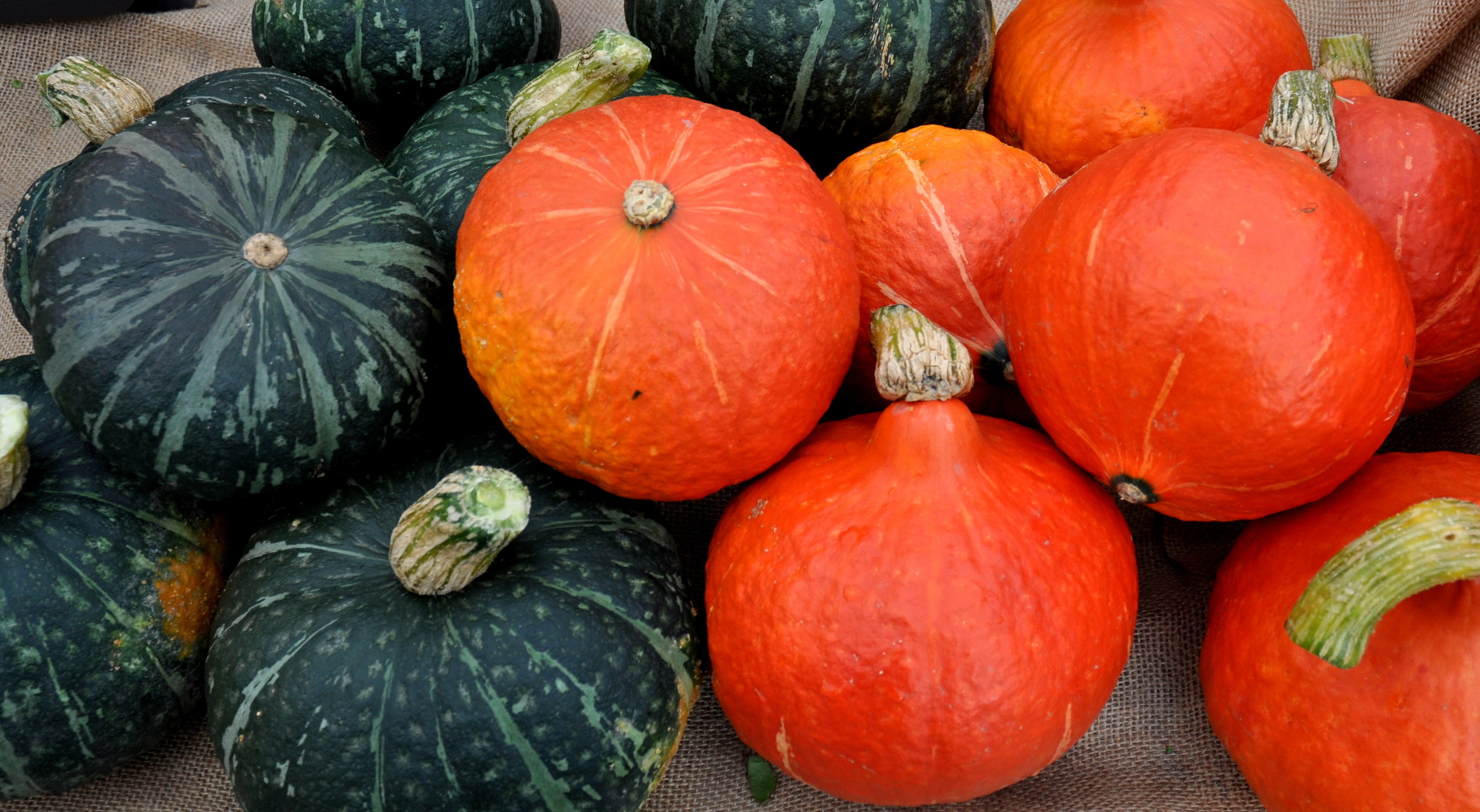 Kabocha and Red Kuri winter squash from One Leaf Farm. Photo copyright 2013 by Zachary D. Lyons.