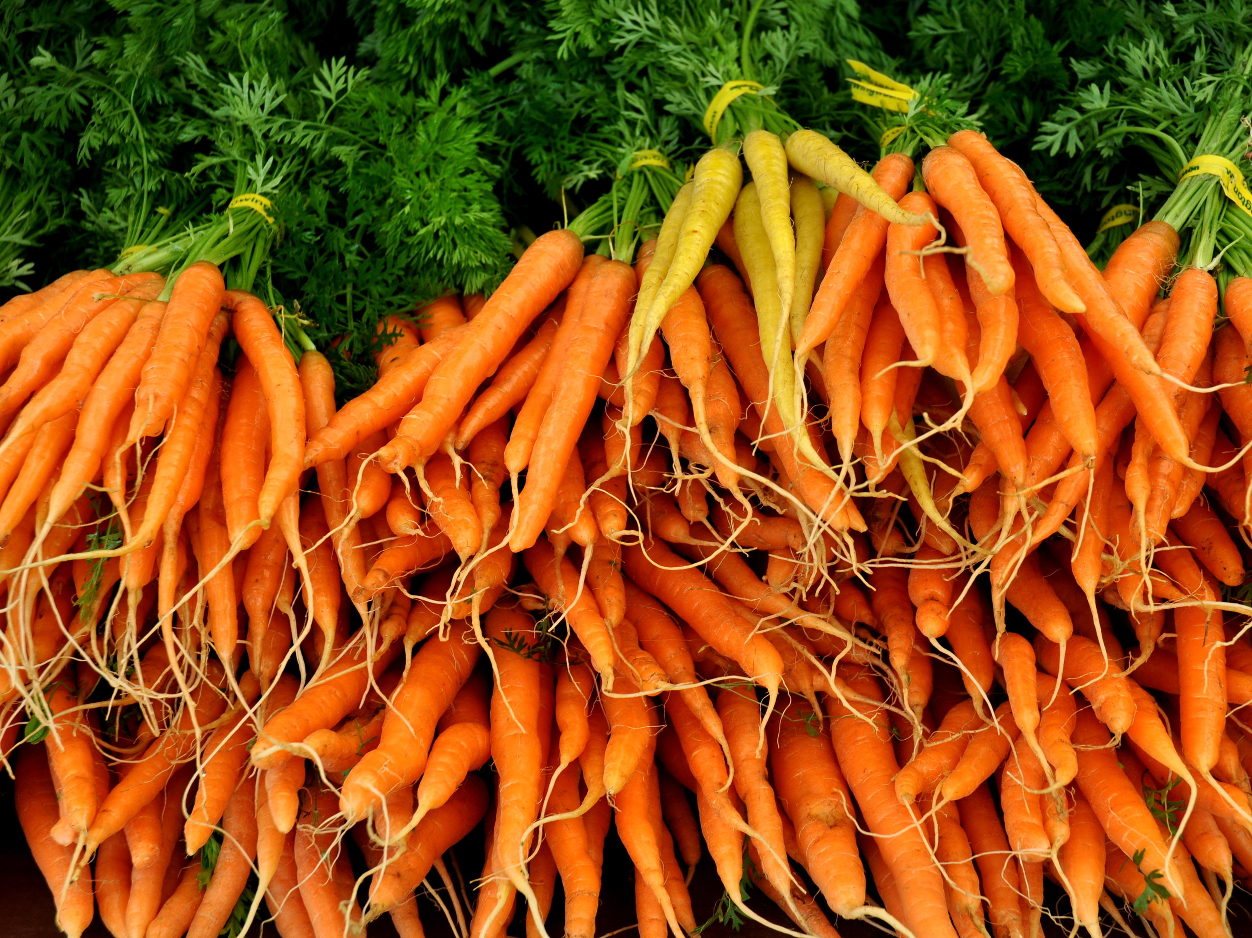 Carrots from Alm Hill Gardens.. Photo copyright 2014 by Zachary D. Lyons.