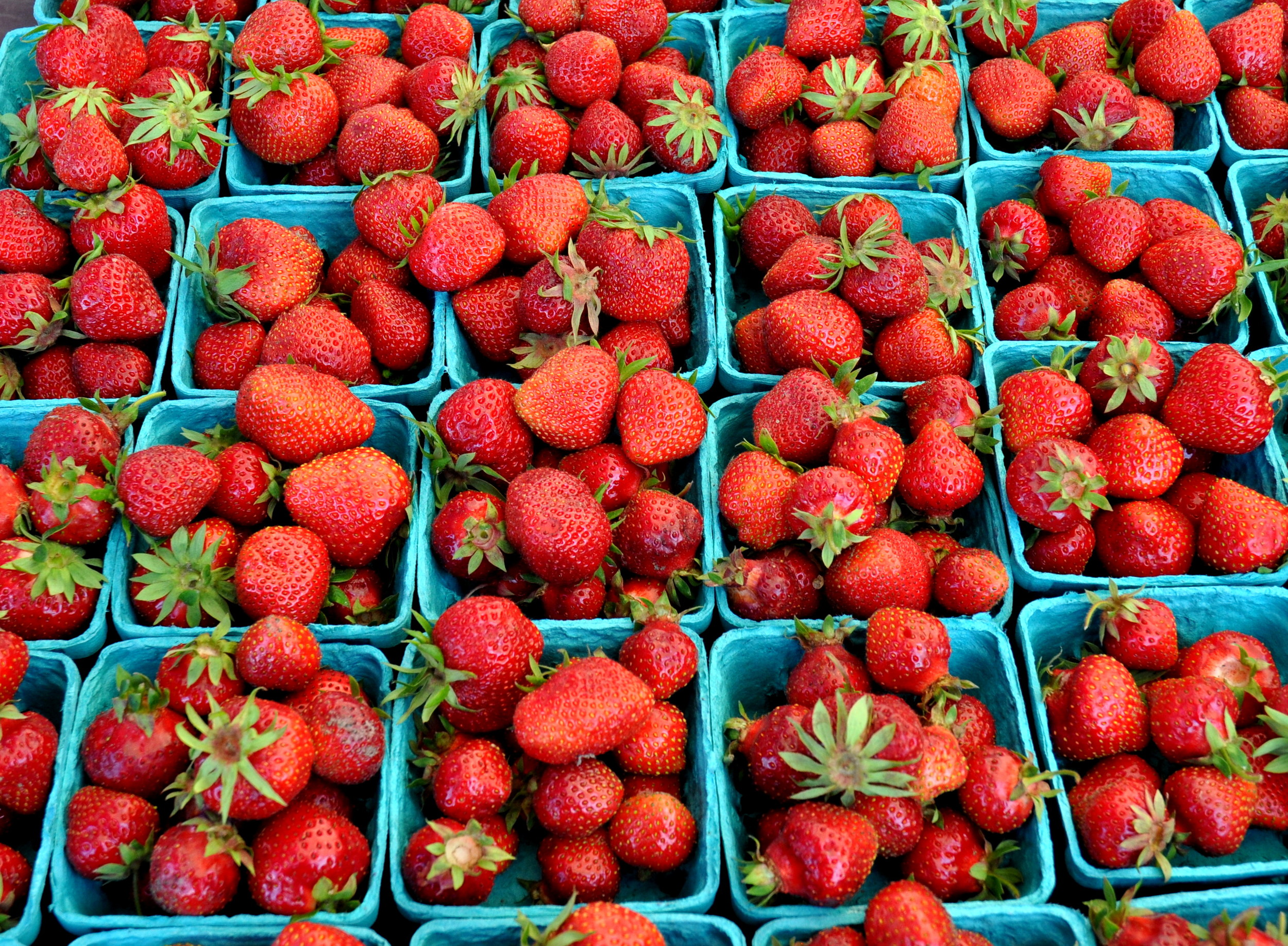 Organic strawberries from Alm Hill Gardens. Photo copyright 2014 by Zachary D. Lyons.