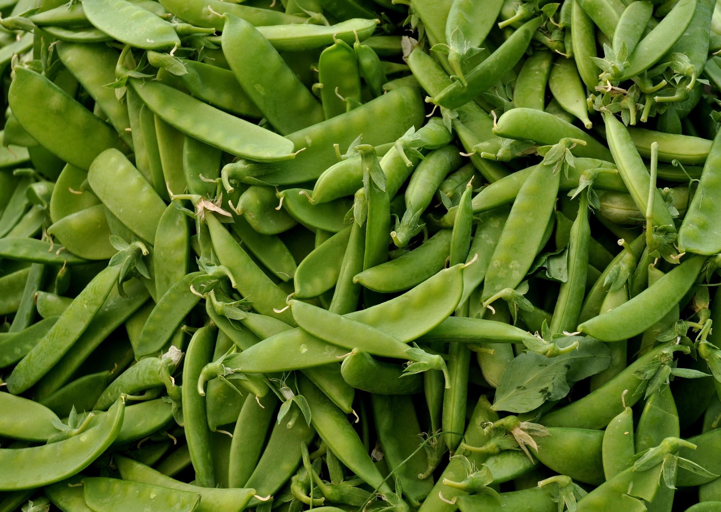 Snow peas from Alvarez Organic Farms. Photo copyright 2014 by Zachary D. Lyons.