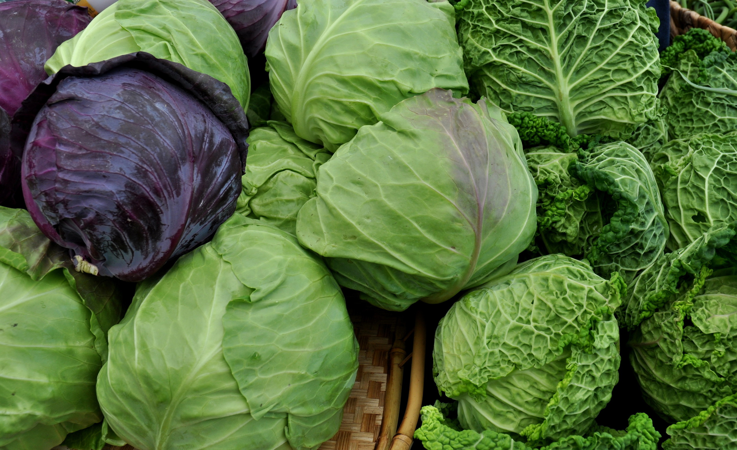 Cabbage from Kirsop Farm.. Photo copyright 2014 by Zachary D. Lyons.