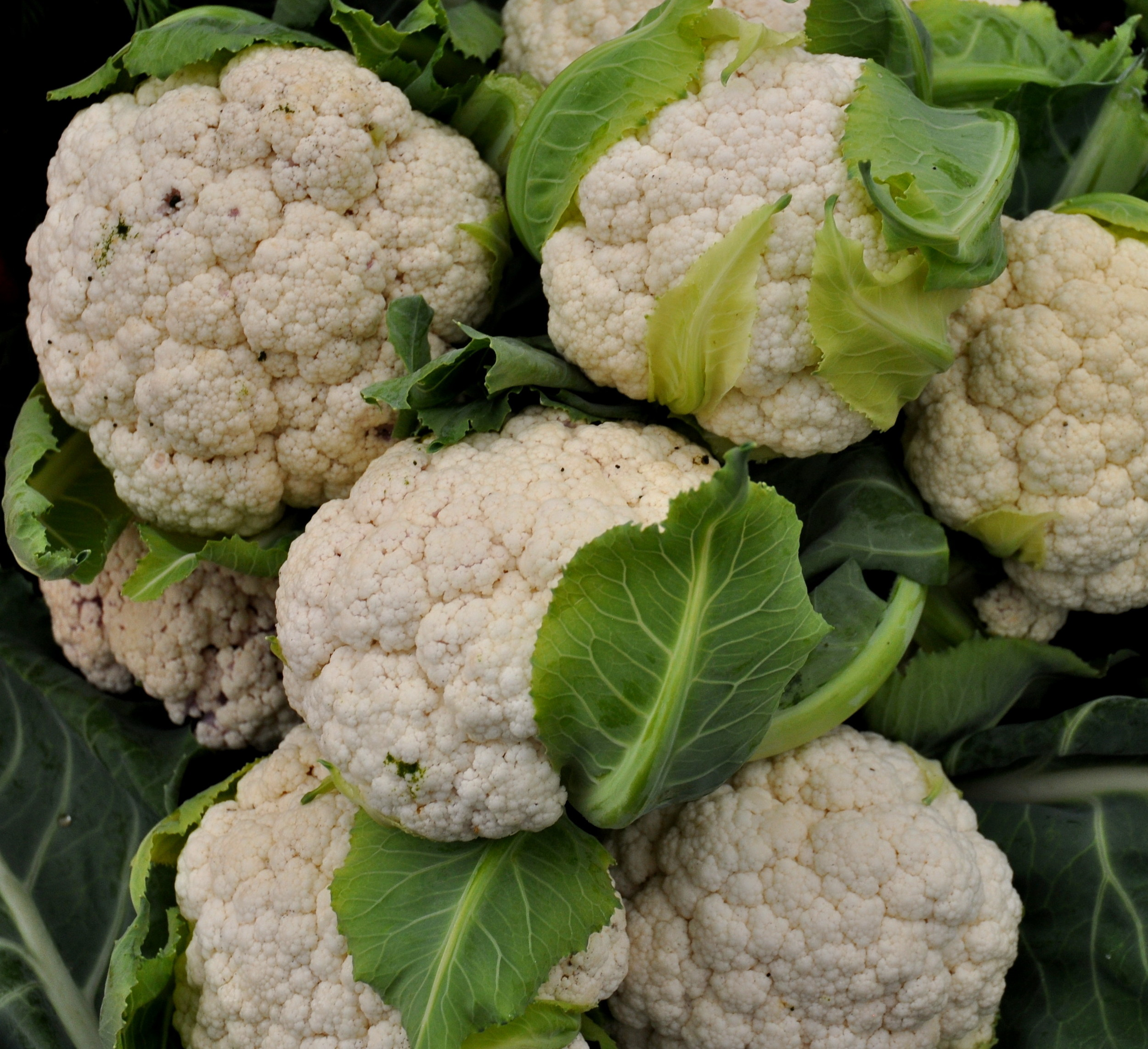 Cauliflower from Kirsop Farm. Photo copyright 2014 by Zachary D. Lyons.