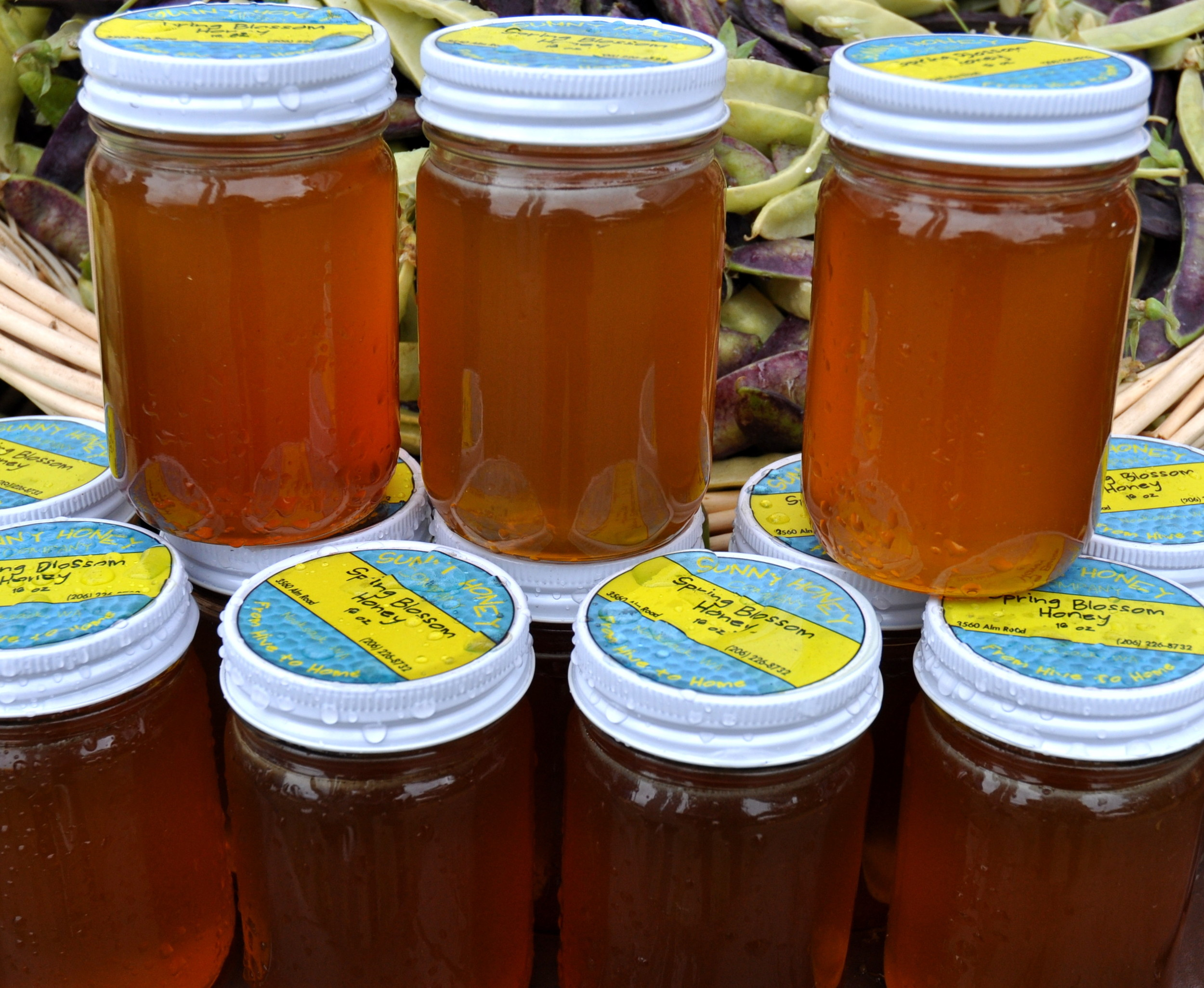 Sunny Honey from Alm Hill Gardens. Photo copyright 2014 by Zachary D. Lyons.
