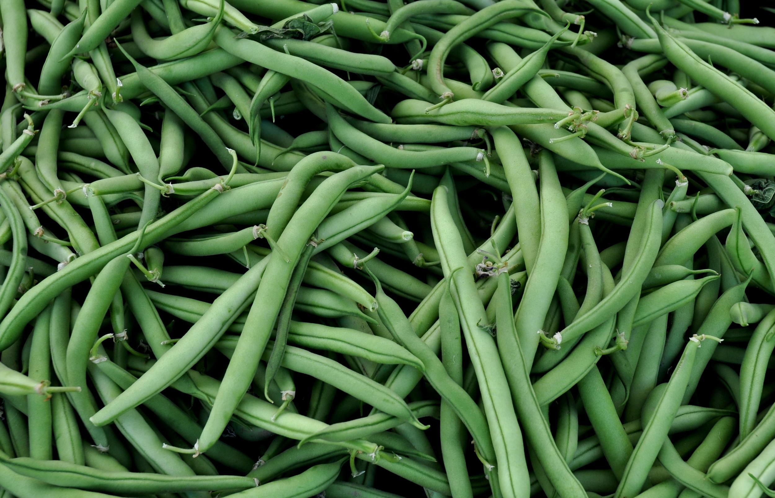 Green beans from Alvarez Organic Farms. Photo copyright 2014 by Zachary D. Lyons.