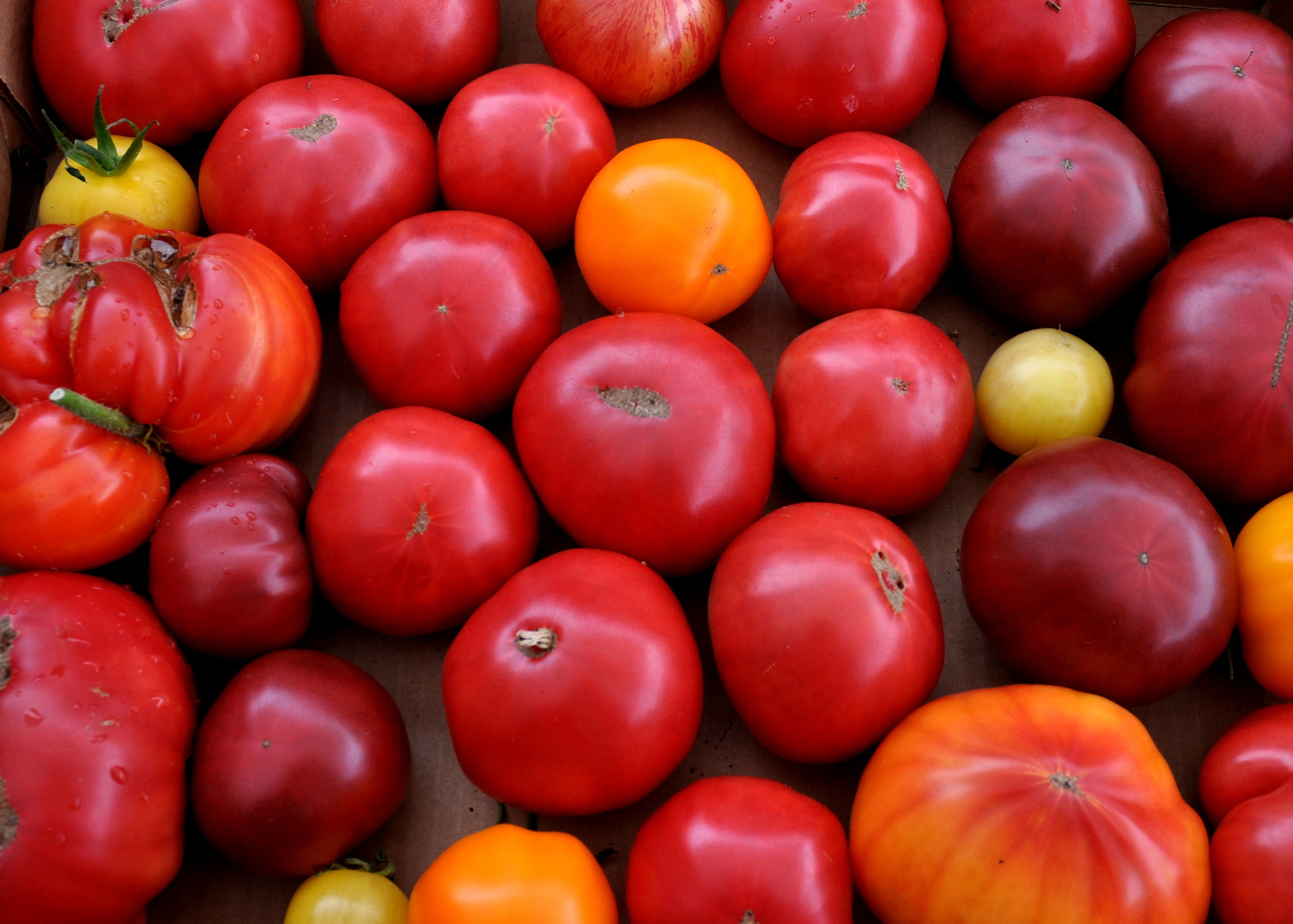 Heirloom tomatoes from Around The Table Farm. Photo copyright 2014 by Zachary D. Lyons.