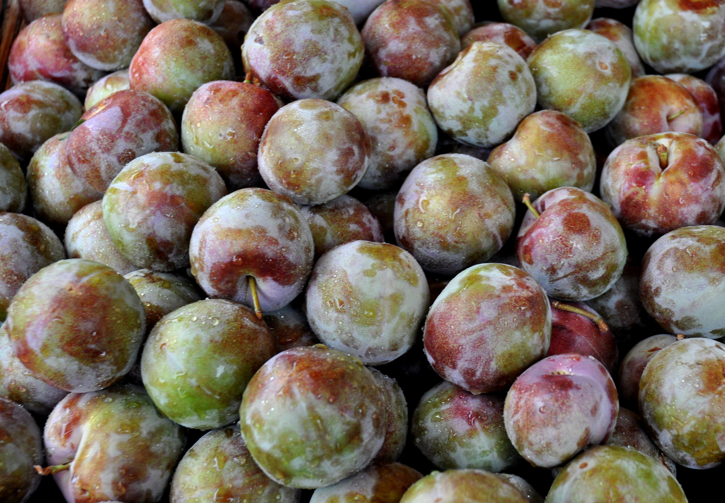 Hawaiian Punch pluots from Collins Family Orchards. Photo copyright 2014 by Zachary D. Lyons.