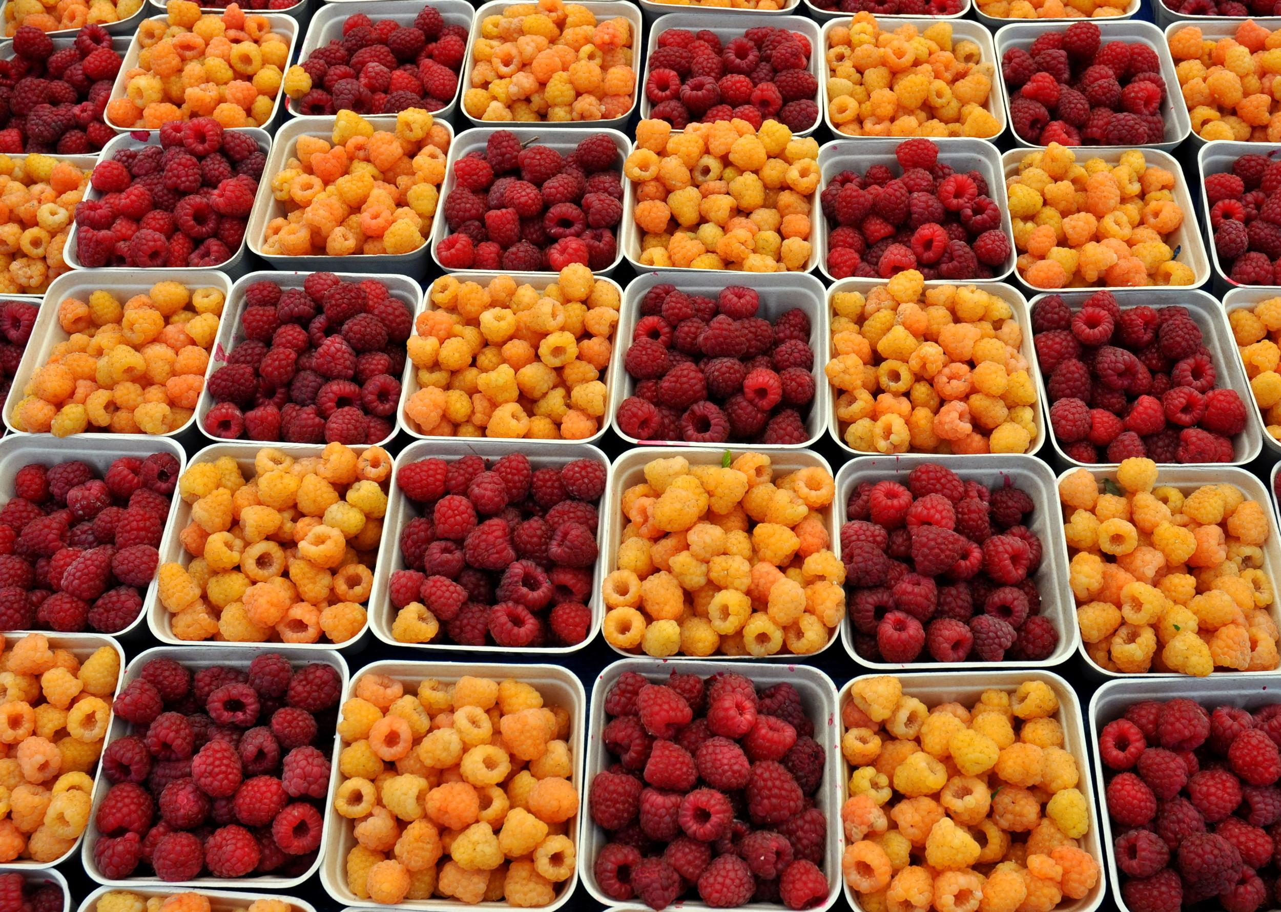 Organic red & salmon raspberries from Gaia's Harmony Farm. Photo copyright 2014 by Zachary D. Lyons.