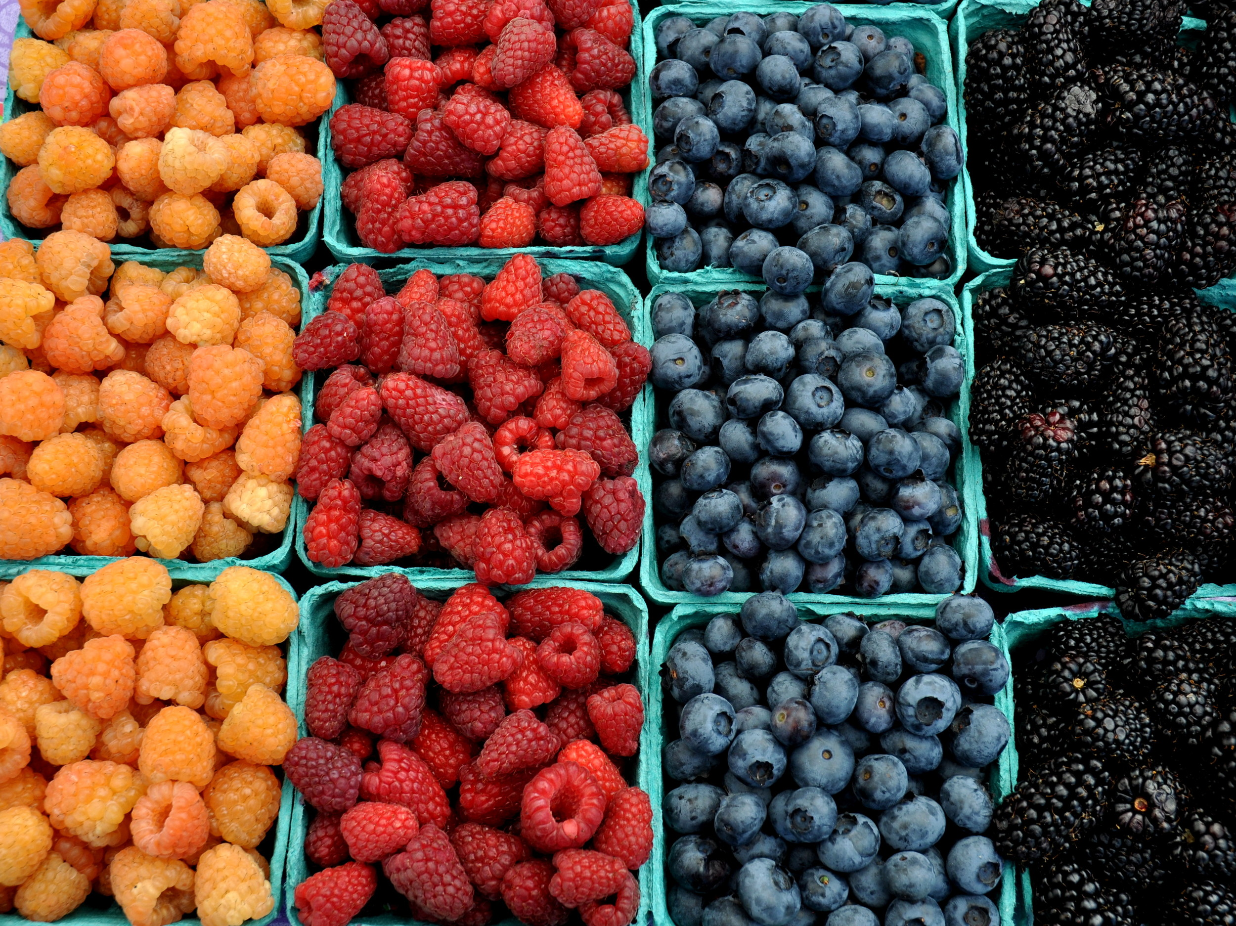 A rainbow of berries from Hayton Farms. Photo copyright 2014 by Zachary D. Lyons.