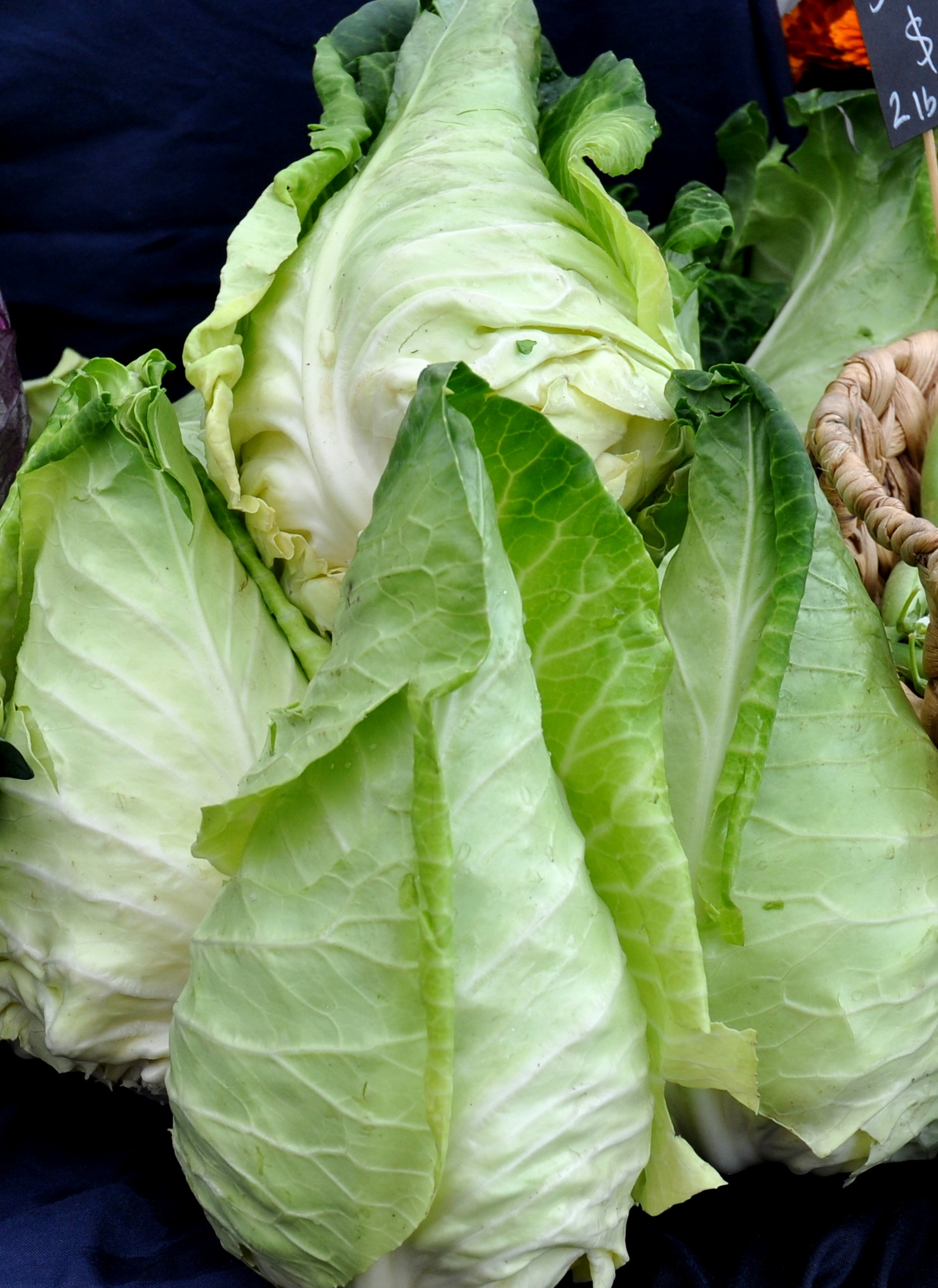 Caraflex cabbage from Kirsop Farm. Photo copyright 2014 by Zachary D. Lyons.