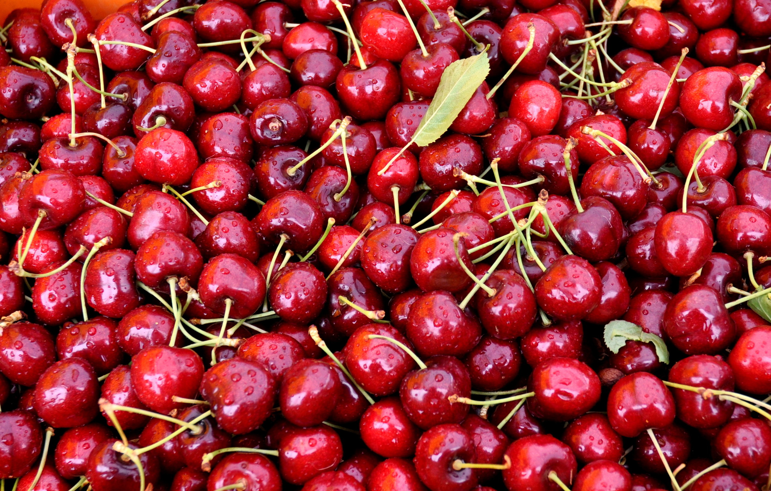 Sweetheart cherries from Lyall Farms. Photo copyright 2014 by Zachary D. Lyons.