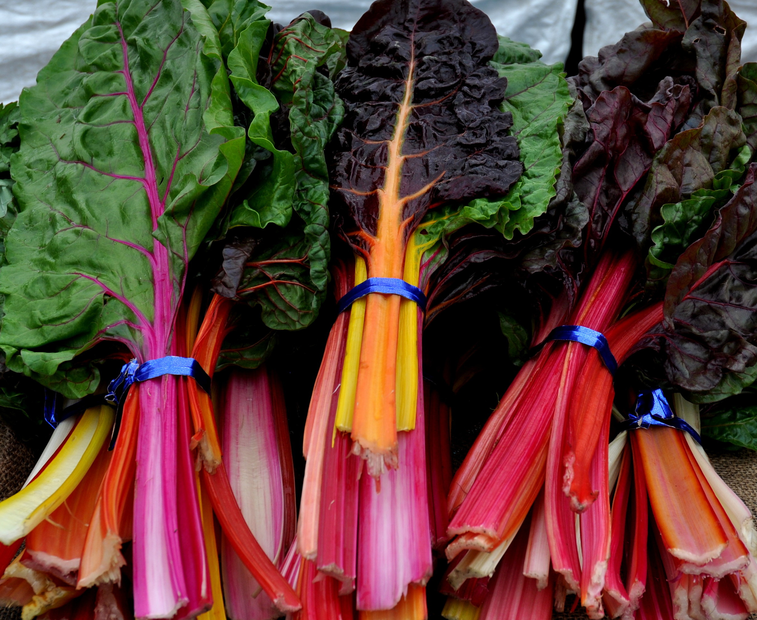 Rainbow chard from One Leaf Farm. Photo copyright 2014 by Zachary D. Lyons.