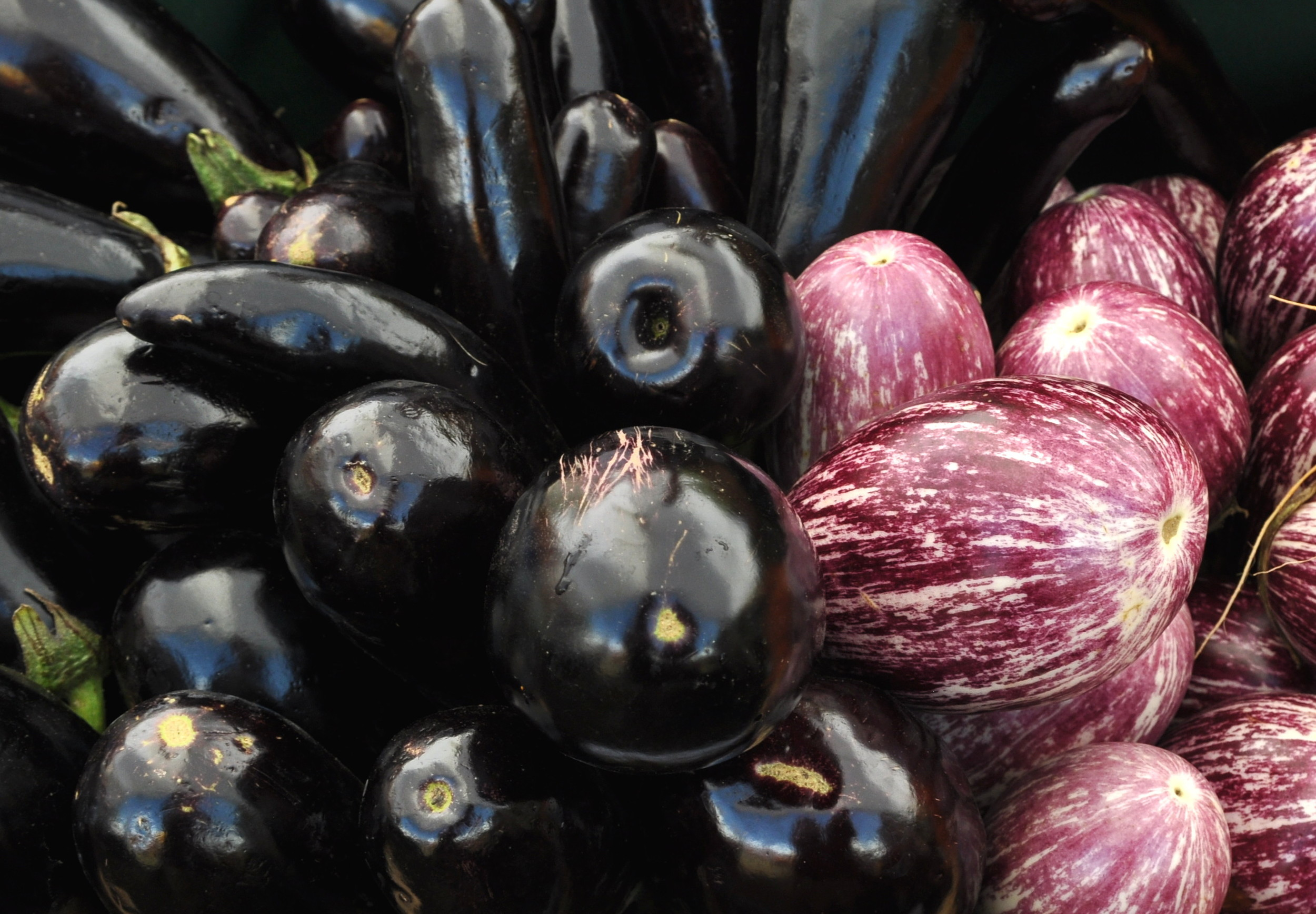 Eggplant from Alm Hill Gardens at Wallingford Farmers Market. Copyright Zachary D. Lyons.
