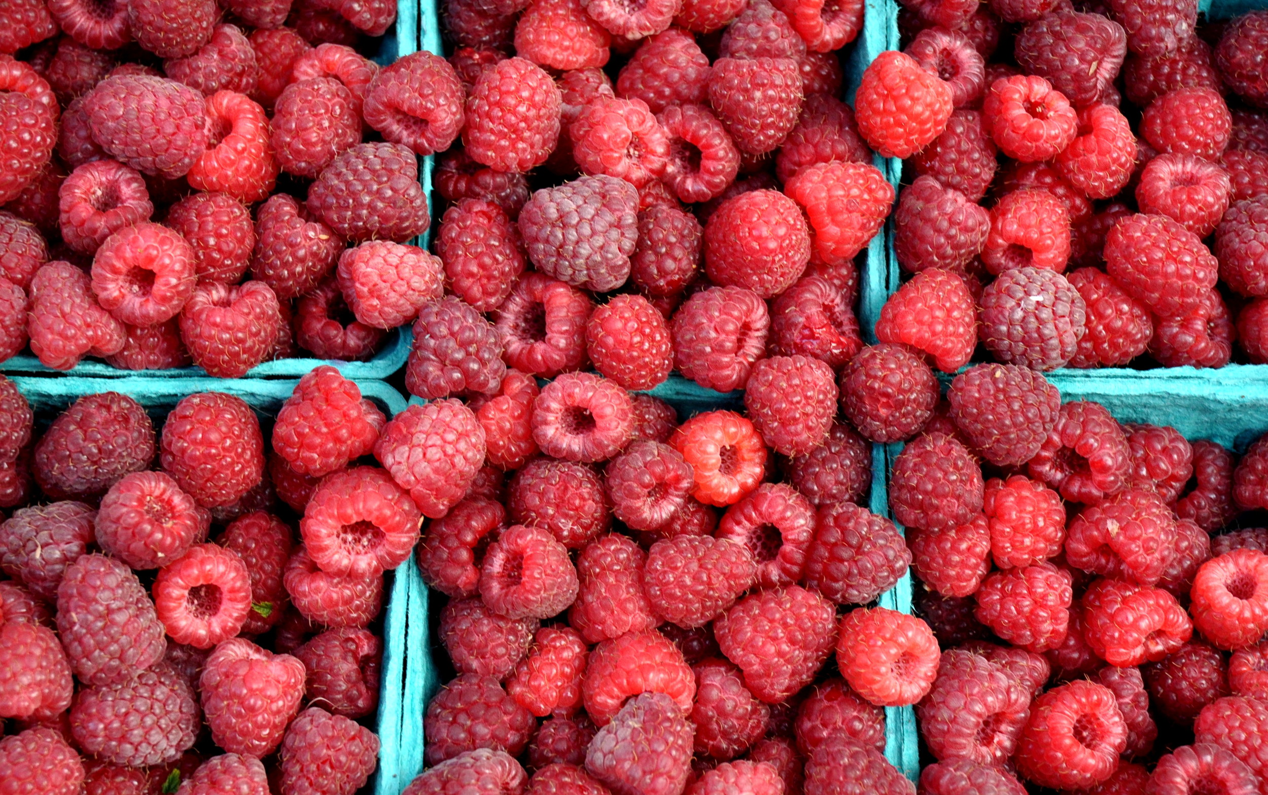 Organic raspberries from Gaia's Harmony Farm. Copyright Zachary D. Lyons.