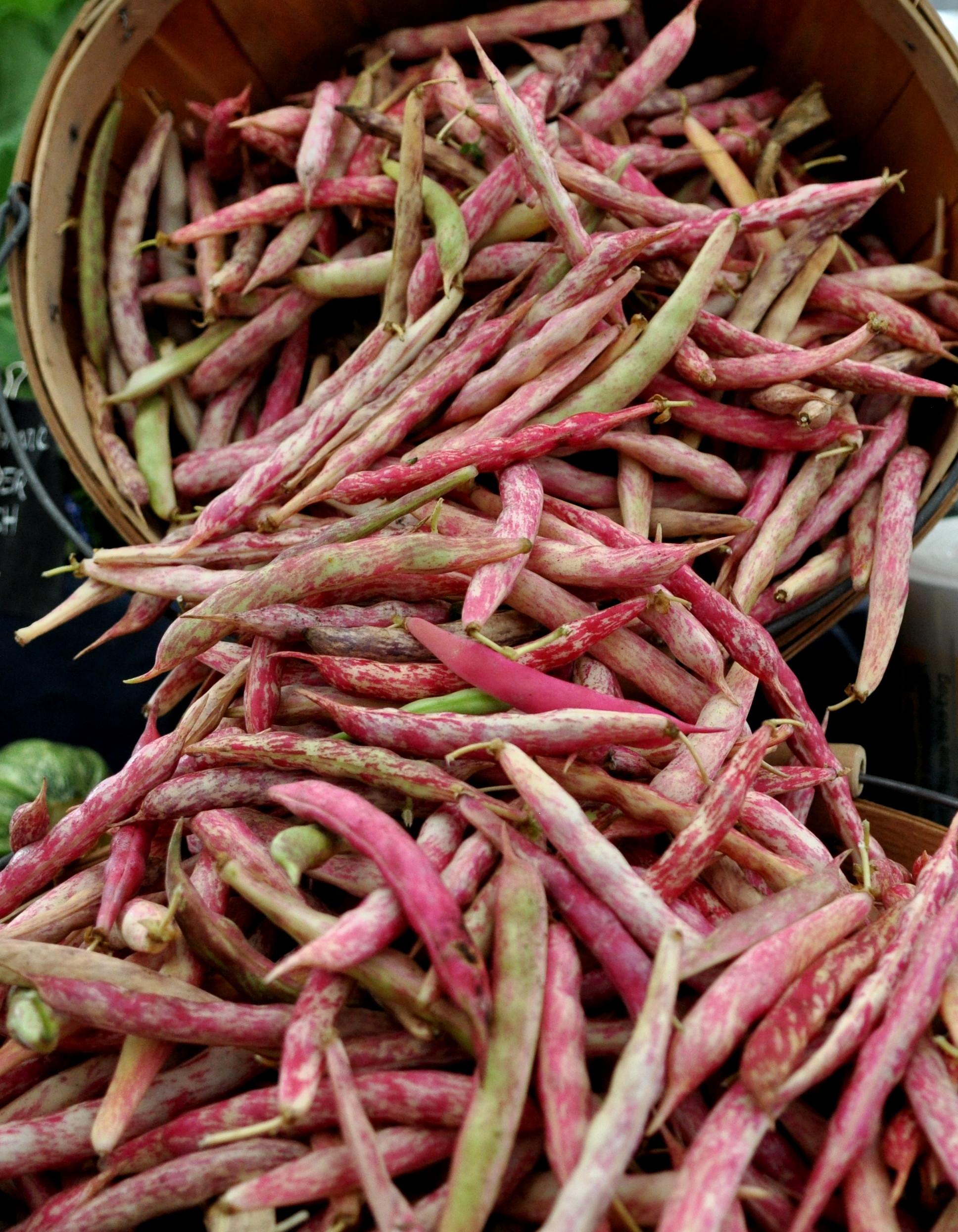 Cranberry beans from Kirsop Farm at Wallingford Farmers Market. Copyright Zachary D. Lyons.