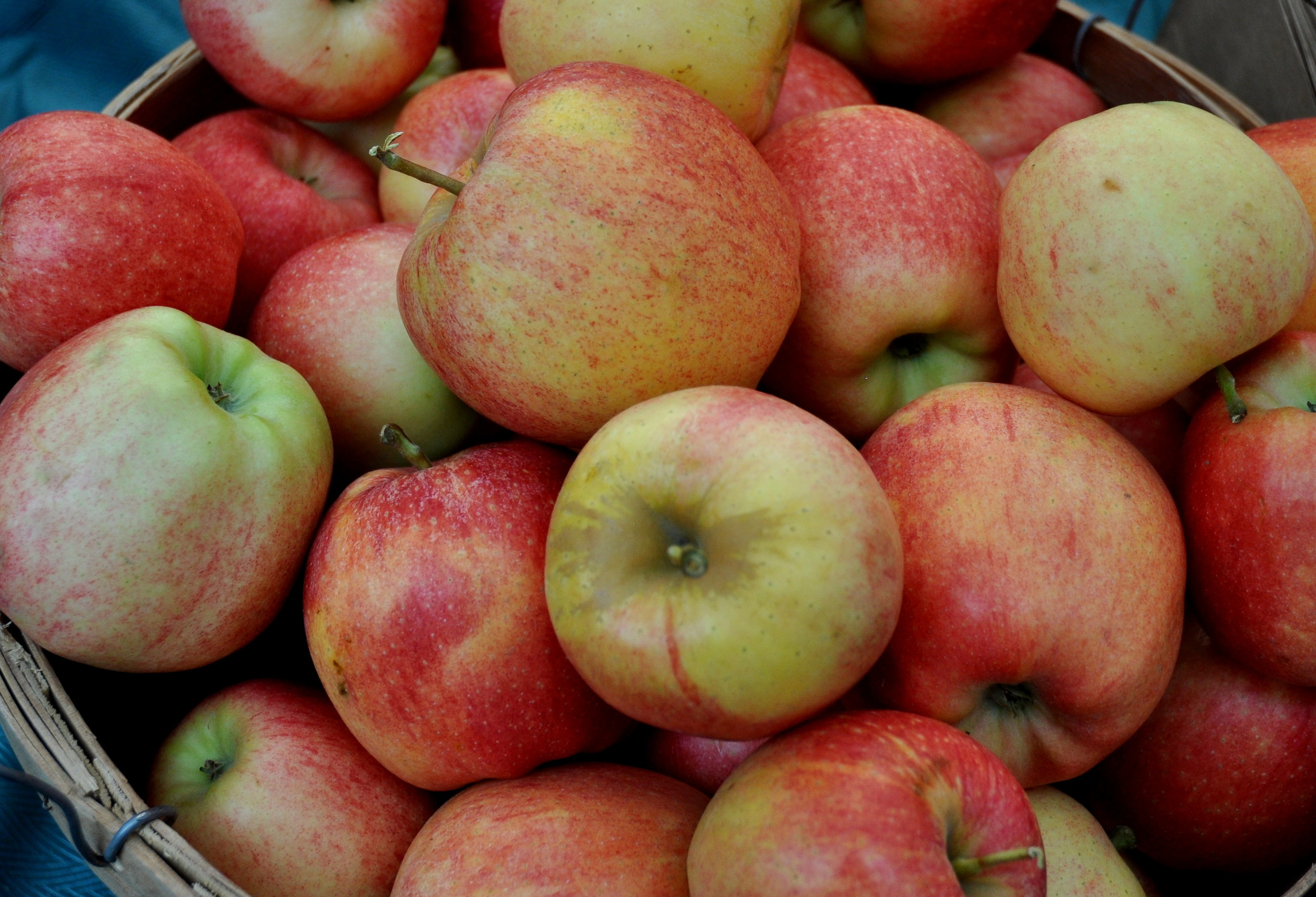 Gala apples from Martin Family Orchards at Wallingford Farmers Market. Copyright Zachary D. Lyons.