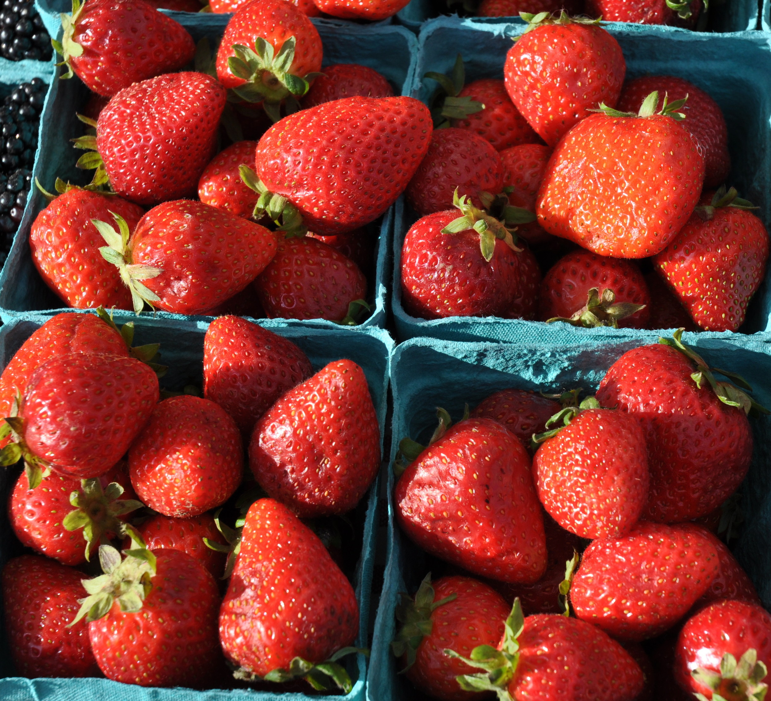 Everbearing strawberries from Sidhu Farms at Wallingford Farmers Market. Copyright Zachary D. Lyons.