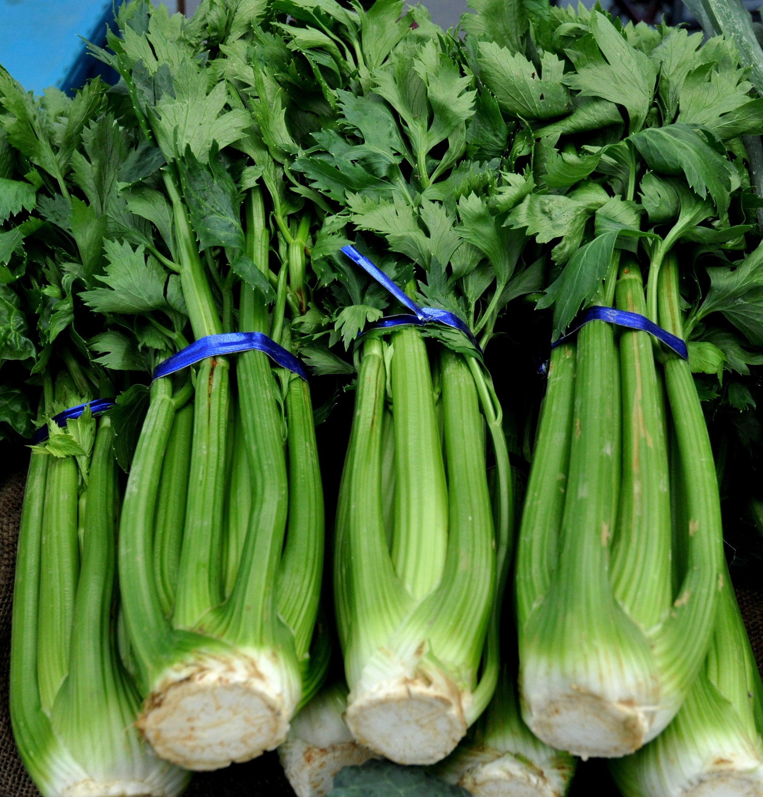 Celery from One Leaf Farm at Wallingford Farmers Market. Copyright Zachary D. Lyons.