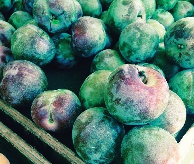 Hawaiian Punch Pluots from Collins Family Orchards