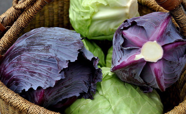 Red and green cabbage. Photo credit: Zachary D Lyons.