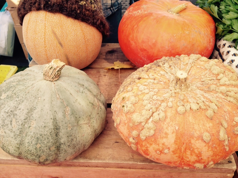 Pumpkins Get Chilly, Too/Around the Table Farm