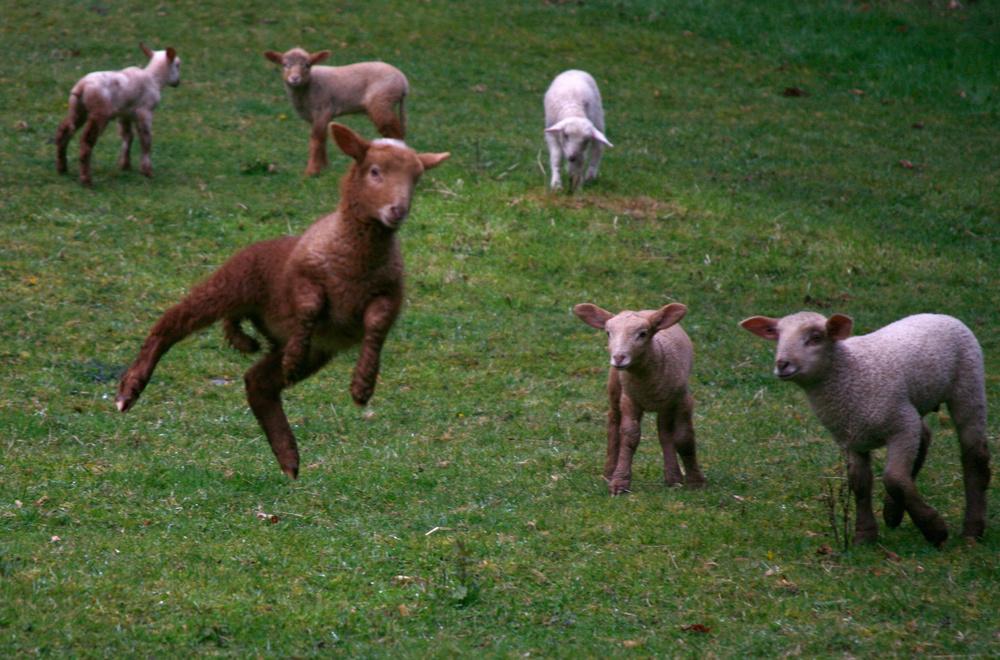 PHOTO COURTESY OF GLENDALE SHEPHERD. CREDIT:SARAH ROSSELET.