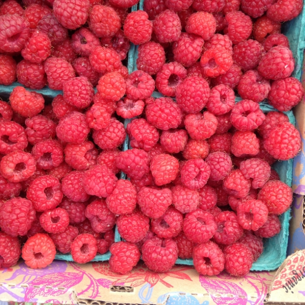 hayton-farms-raspberries_27233351966_o.jpg