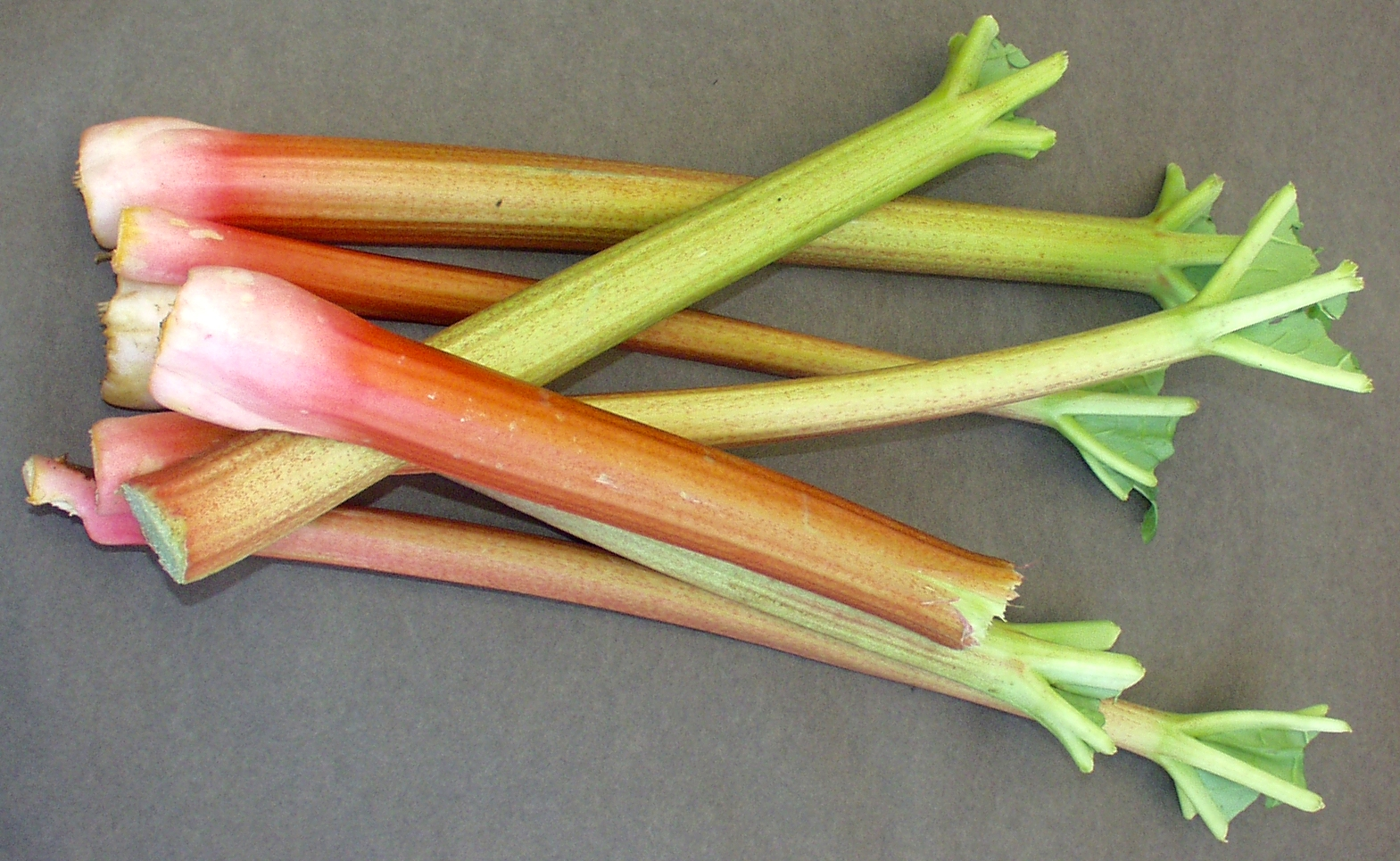 First of the season rhubarb from Alm Hill Gardens in Everson. Photo copyright 2009 by Zachary D. Lyons.