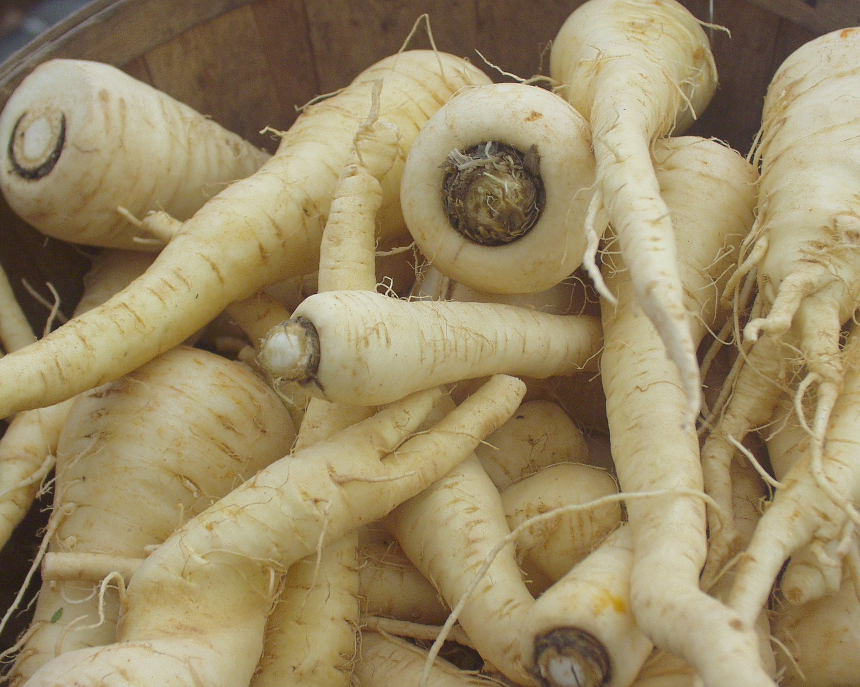 Nash's parsnips at Ballard Farmers Market. Photo copyright 2009 by Zachary D. Lyons.