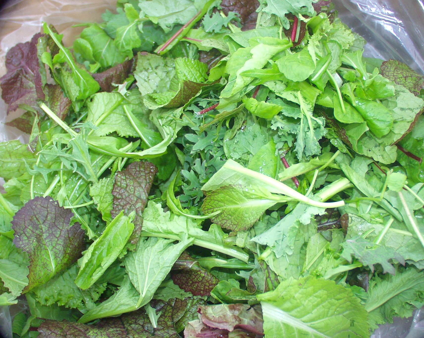 Colinwood Farms' salad mix is big and bold with spicy mustards and bitter mizunas. Photo copyright 2009 by Zachary D. Lyons.