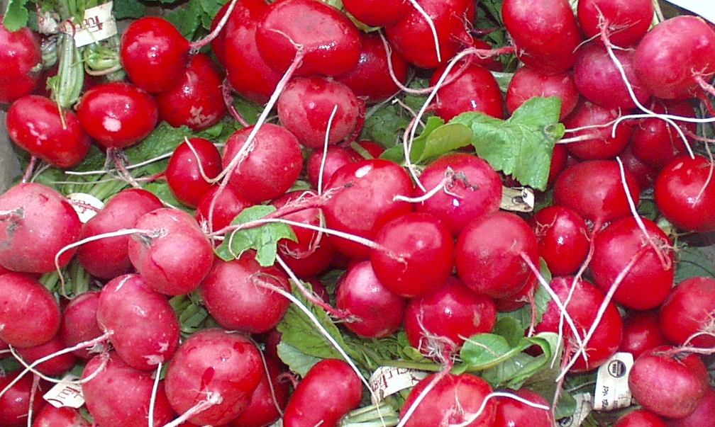 In a season filled with every shade of green, these brilliant, red radishes at Full Circle Farm definitely brightened up the Market. Photo copyright 2009 by Zachary D. Lyons.