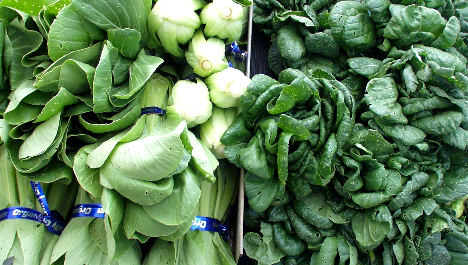 Boistfort Valley bok choi and tatsoi. Photo copyright 2009 by Zachary D. Lyons.
