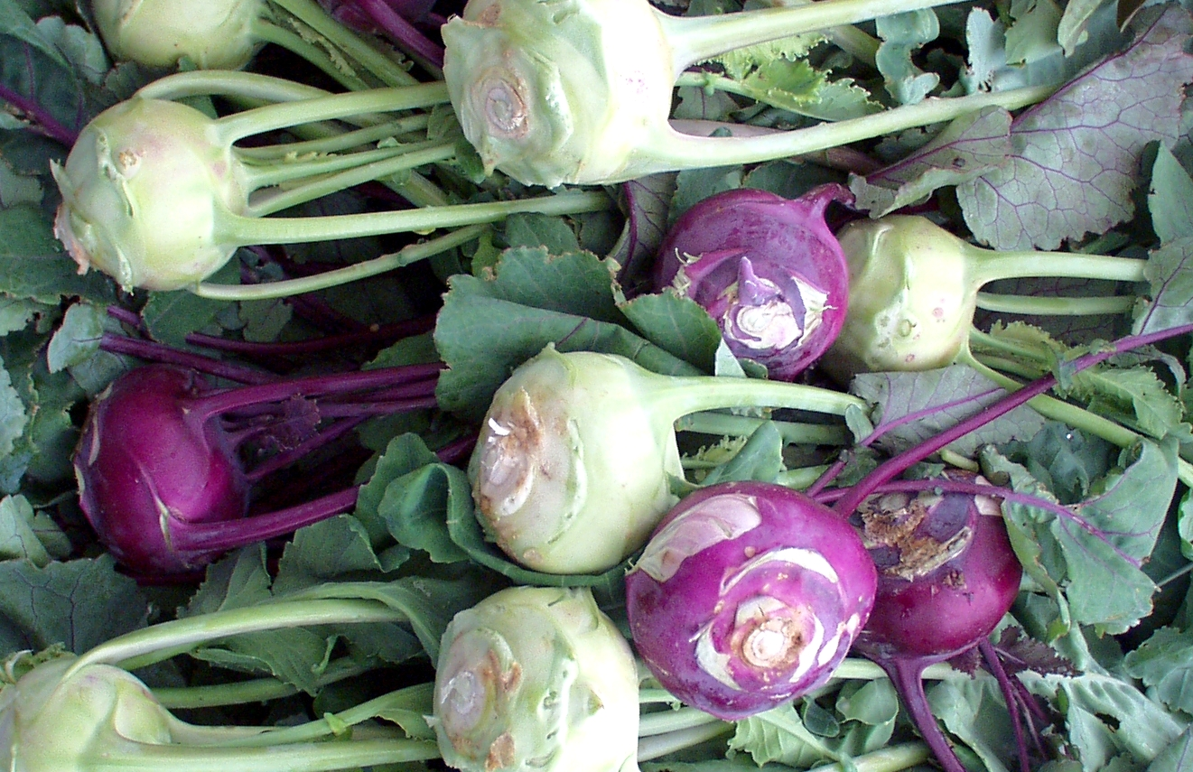 Kohlrabi, a member of the cabbage family, is a staple of some Eastern European diets. Photo copyright 2009 by Zachary D. Lyons.