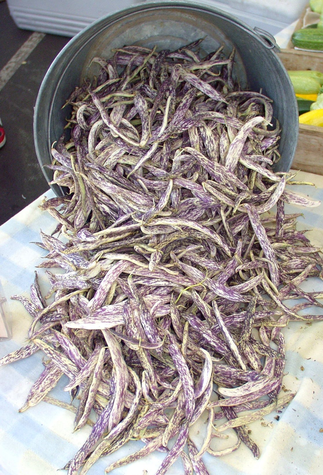 Dragon Tongue beans from Growing Things. Photo copyright 2009 by Zachary D. Lyons.