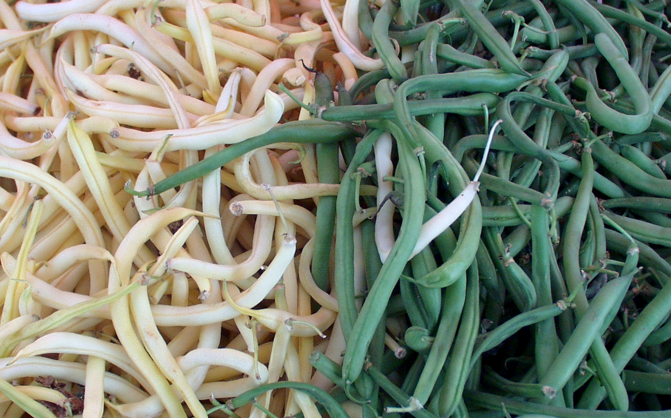 Green and yellow wax beans from Magana. Photo copyright 2009 by Zachary D. Lyons.