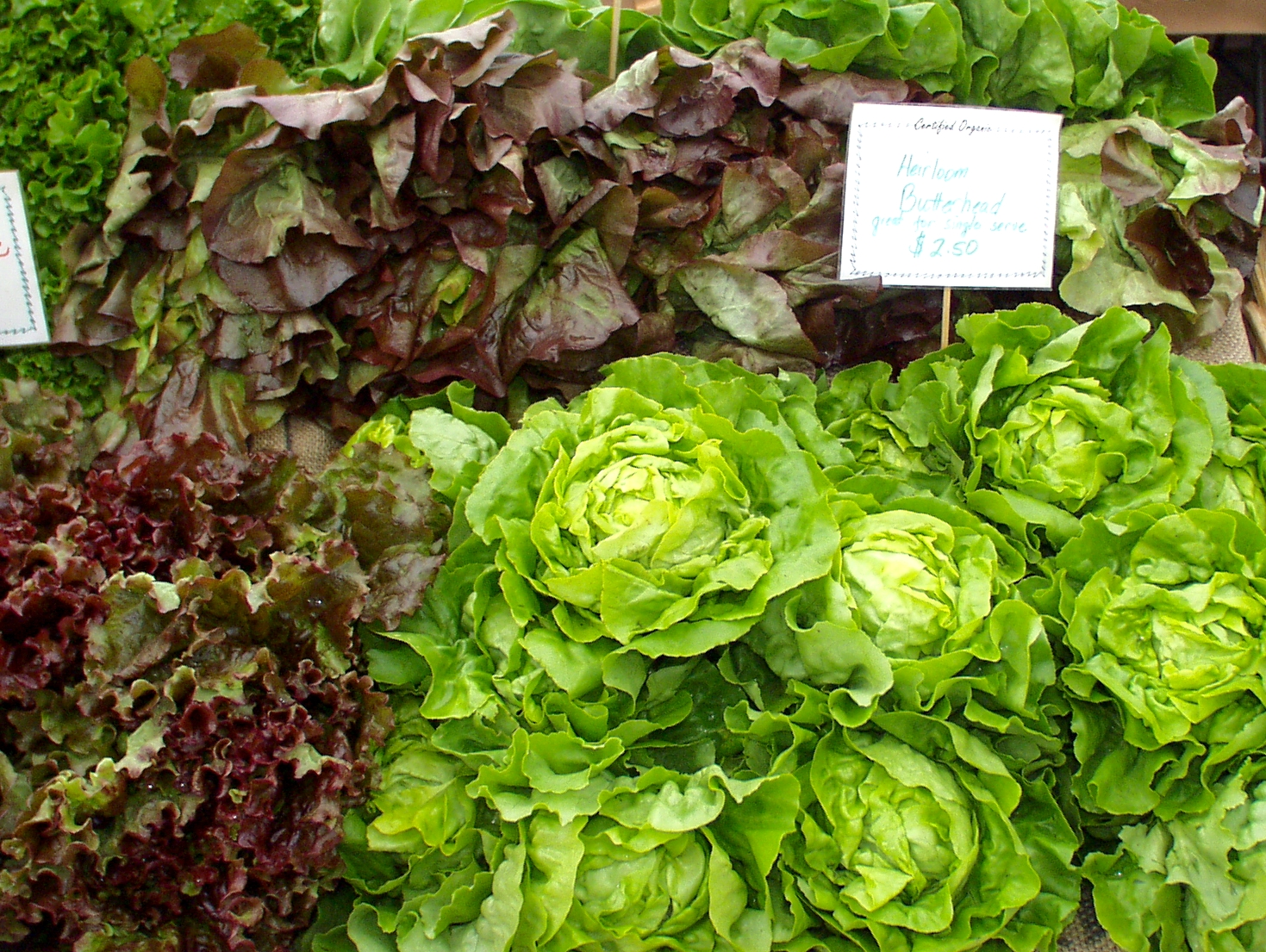 Red Barn has five gorgeous varieties of lettuce. Photo copyright 2009 by Zachary D. Lyons.