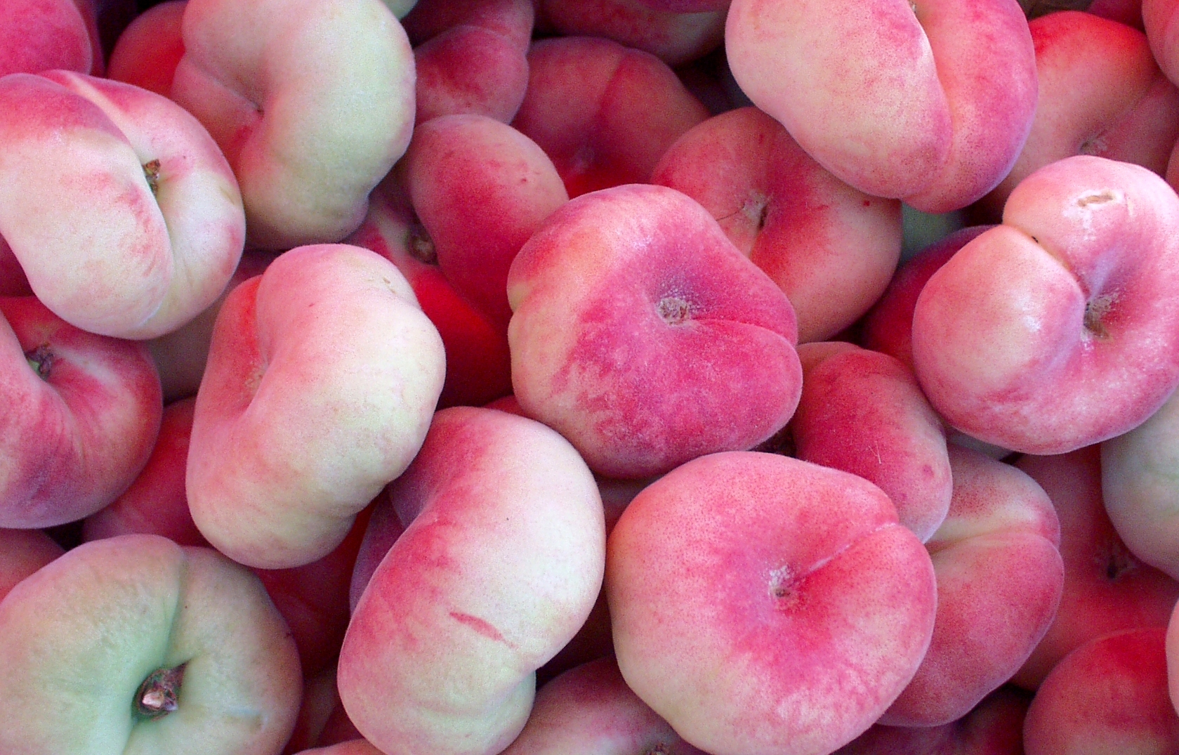 Donut peaches from Tiny's Organic Produce. Photo copyright 2009 by Zachary D. Lyons.