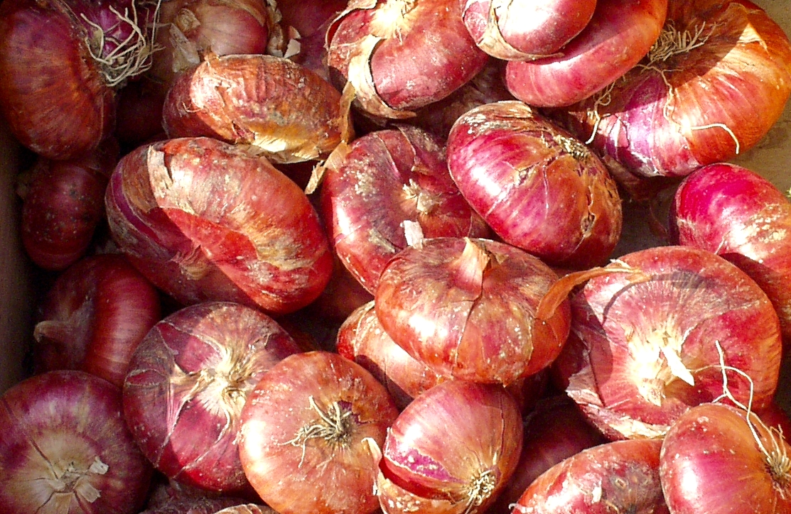 Red Cippolini onions from Local Roots. Photo copyright 2009 by Zachary D. Lyons.