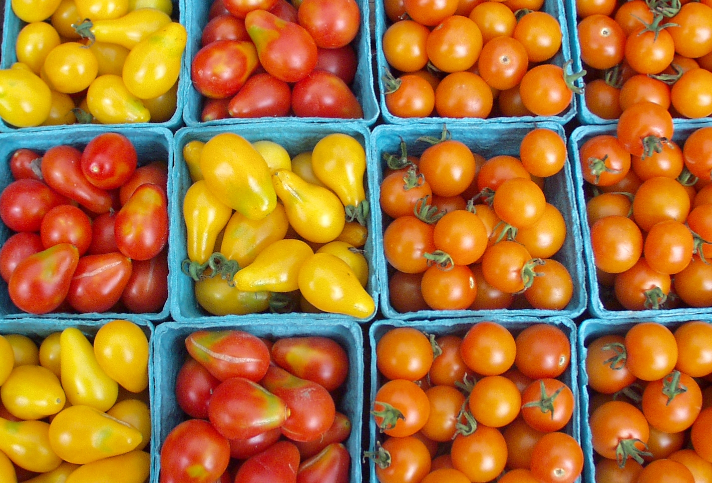Various cherry tomatoes from Nature's Last Stand. Photo copyright 2009 by Zachary D. Lyons.